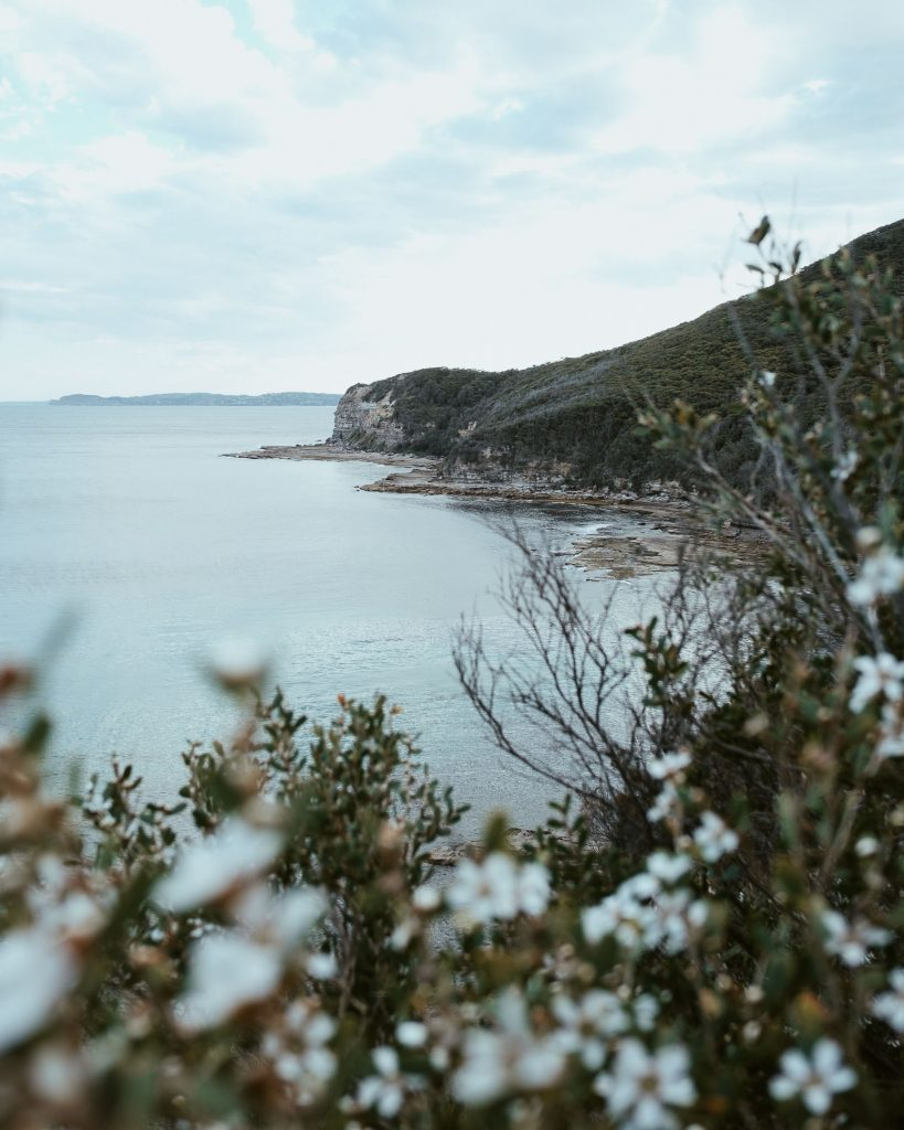 Photo of Bouddi Coastal Walk