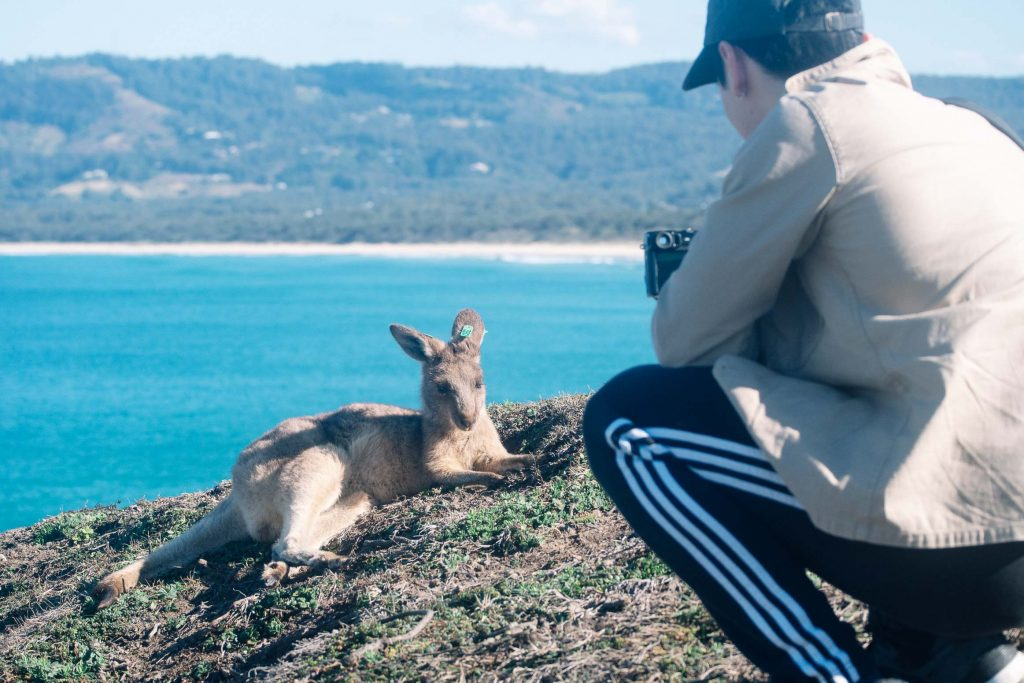Photograph of a kangaroo lying down, with Noah in the front taking a photo of the kangaroo